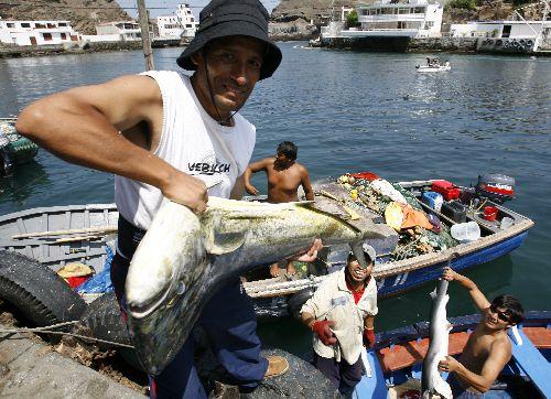 pescado-perico